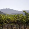 קורס יין – לימודי ייננות במסגרת קורס יין מקצועי