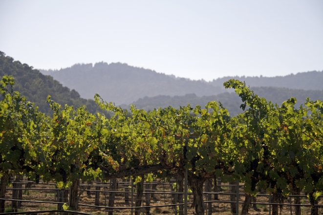 MicroStock.co.il_00129249 קורס יין – לימודי ייננות במסגרת קורס יין מקצועי